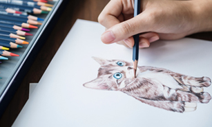 Drawing of cat with color pencils